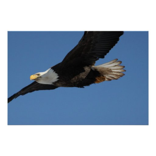 BMIS Bald Eagle on a Mission Posters
