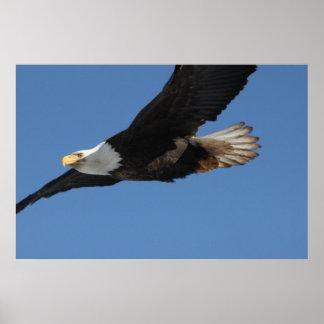 BMIS Eagle calvo en una misión Poster