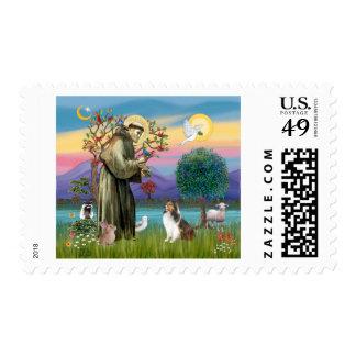 Bndr-StFrancis-Sheltie-Leah-nocat Stamps