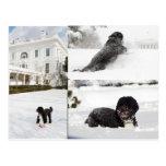 """BO """"el perro de la familia de Obama"""" en la postal"""
