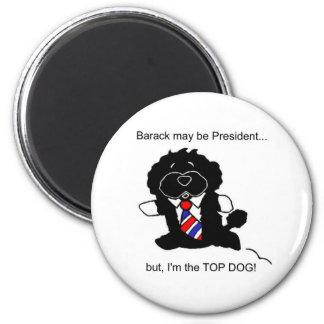 BO es imán del perro superior