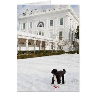 Bo Obama Note Card - Rose Garden