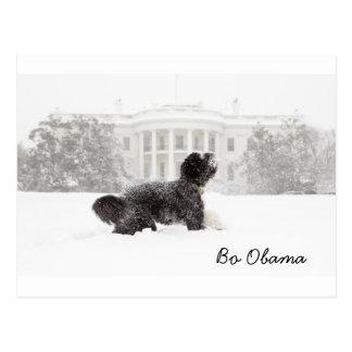 Bo Obama Postcard