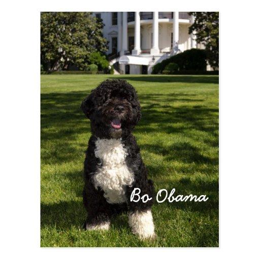 Bo Obama Post Cards