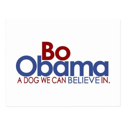 Bo Obama the Dog Post Card