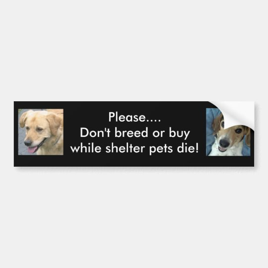 Bo & Stan bumper sticker