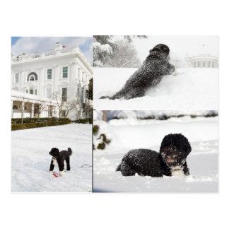 """Bo """"The Obama Family dog"""" in the snow postcard"""
