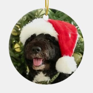 Bo Waiting for Santa - Ornament