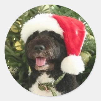 Bo Waiting for Santa - Sticker