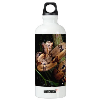 Boa Constrictor Aluminum Water Bottle
