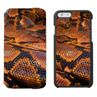 Boa Constrictor iPhone 6/6s Wallet Case
