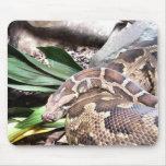 Boa constrictor mousepad
