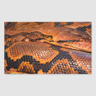 Boa Constrictor Rectangular Sticker