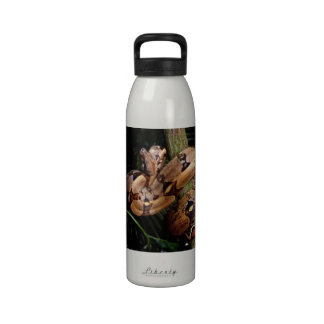 Boa Constrictor Water Bottles