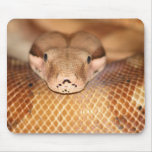 Boa de color salmón Mousepad Alfombrillas De Raton