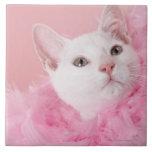 Boa de plumas que lleva del gato azulejo