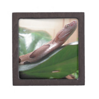 Boa Photograph Premium Keepsake Box
