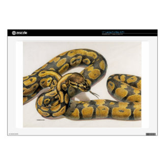 Boa Wrap Decals For Laptops