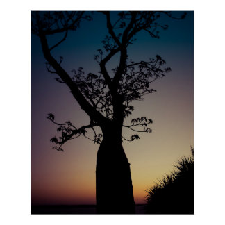 Boab Tree Silhouette at Sunset Poster