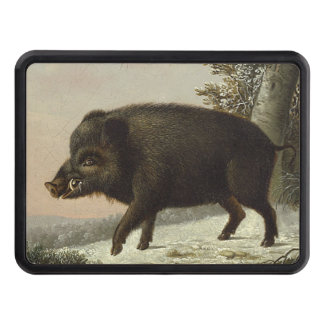Boar Pig Vintage German Painting Hitch Cover