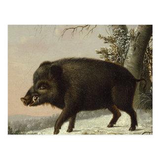 Boar Pig Vintage German Painting Postcard