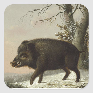 Boar Pig Vintage German Painting Square Stickers