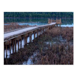 Boardwalk Above Bog in Bloomington Refuge Postcard