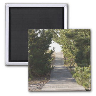 Boardwalk footpath through evergreen 2 inch square magnet