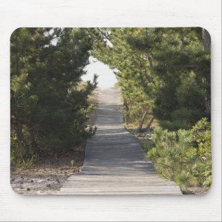 Boardwalk footpath through evergreen mouse pad