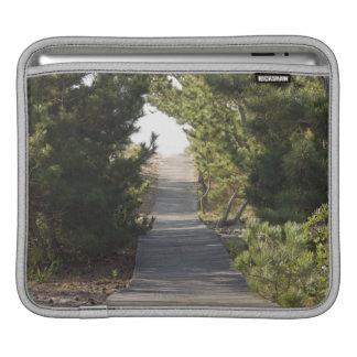 Boardwalk footpath through evergreen sleeve for iPads