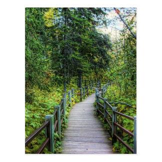Boardwalk through Woods Postcard