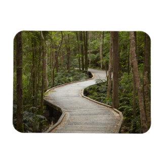 Boardwalk to Nelson Falls, Franklin - Gordon Rectangular Magnets
