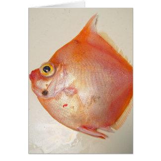 Boarfish Card