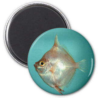 Boarfish Magnet