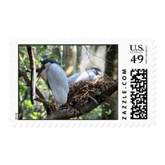 Boat Billed Heron Postage Stamp
