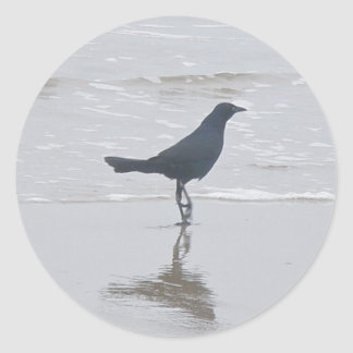 Boat-Tailed Grackle Digging for a Meal Series Classic Round Sticker