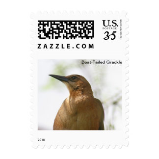 Boat-Tailed Grackle Postage Stamps