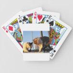 Boatyard Cats Card Decks