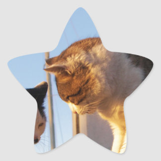 Boatyard Cats Star Sticker