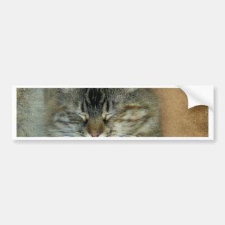 Bob Bumper Sticker