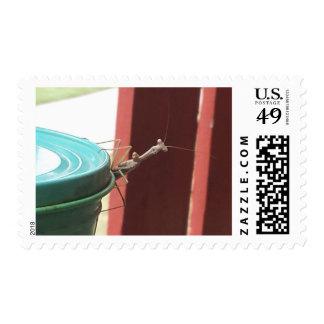 Bob the Mantis Postage Stamp