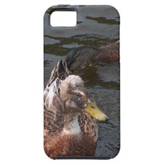 Bobble top iPhone SE/5/5s case