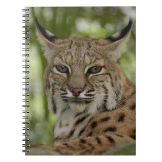 Bobcat 2 spiral notebook