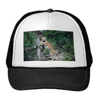 Bobcat at scratching post, sign post trucker hat