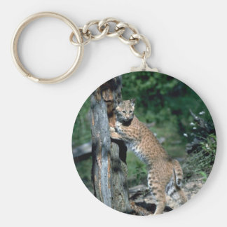 Bobcat at scratching post, sign post keychain