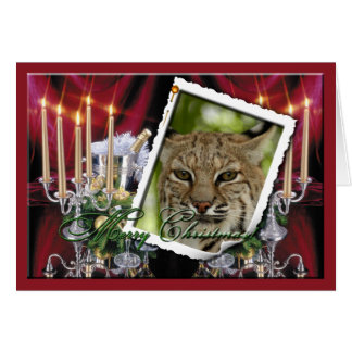 Bobcat Christmas Greeting Card