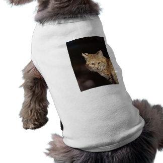 Bobcat Close-Up Pet Shirt