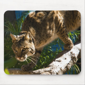 Bobcat Crouch Mouse Pad