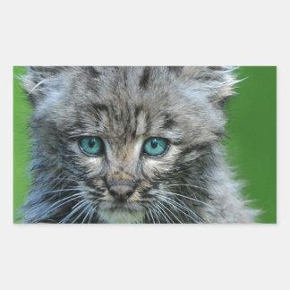 Bobcat Eyes Aqua Beautiful Wild Cat Sticker