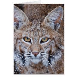 Bobcat Face Card